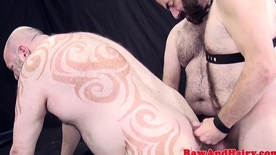 Tatted superchub barebacked in threeway